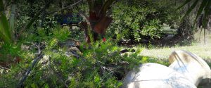 Green Paradise Studios Dionisiou Halkidiki